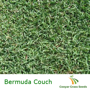 Bermuda Couch
