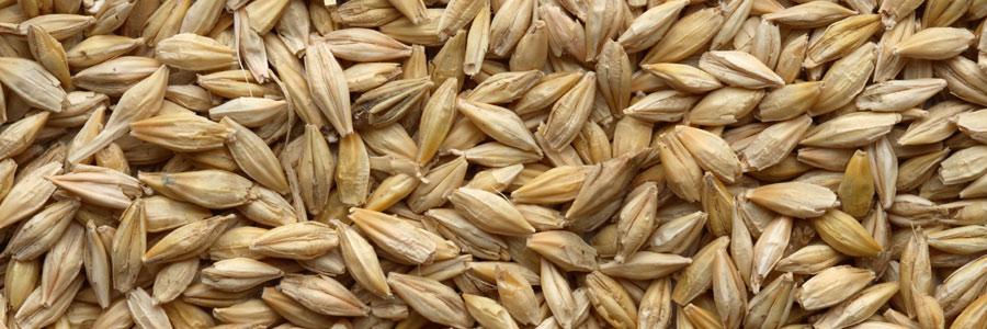 null_lox_barley